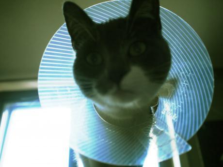 Kitten: Everything Is Just Fine
