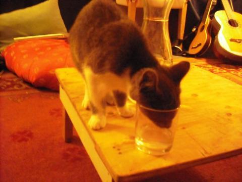 kitten misbehaving 2