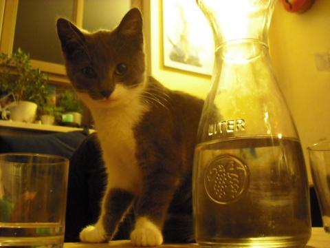 kitten misbehaving