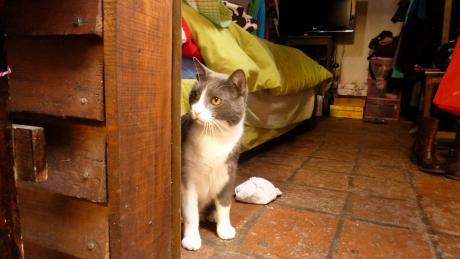 We found kitten! ...